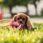 Small dog with toy in mouth