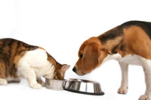 Pets Eating kibble