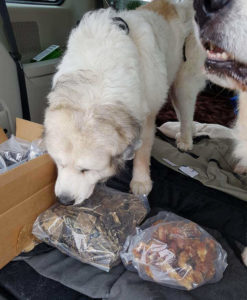 Dogs awaiting some Raw Pet Food Treats